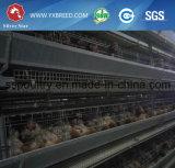 H datilografa o equipamento automático das gaiolas da galinha do ovo das aves domésticas para a exploração agrícola de galinha
