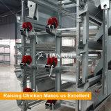 Tianrui Full-galvanisé à chaud automatique Bébé Cage d'élevage de poulet