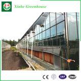 Invernadero caliente del Vidrio-Túnel de la producción de la venta del surtidor de China