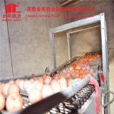 La H digita la gabbia del pollo di strato del pollame delle strumentazioni delle aziende agricole di pollo della gabbia del pollo