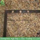 Registro de madeira pequeno da operação simples que lasca a máquina para a filial de árvore