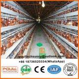 Клетка цыпленка слоя высокого качества для птицефермы Ганы