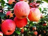 Estrella roja Apple de la nueva cosecha fresca para exportar