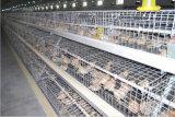 養鶏場の若めんどりの鶏はおりに入れる販売(フレーム)のための装置を