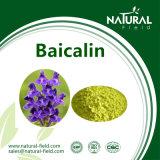 Extrato 80% da raiz de Baicalensis, pó de 85% Baicalin