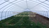 식물성 설치를 위한 태양 플레스틱 필름 온실