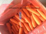 Морковь нового урожая свежая (80-150g)