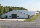 Casa de pollo prefabricada de la estructura de acero del estilo moderno (KXD-PCH3)