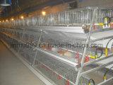 Equipamento Breeding da galinha do baixo preço na casa das aves domésticas (JFW-08)