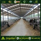 Die Stahlkonstruktion-Kuh-Landwirtschaft verschüttete