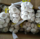 Neues Getreide-neuer Chinese Red//Normal weißer/reiner weißer Großhandelsknoblauch (5.0cm, 5.5cm, 6.0cm)