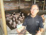 ブタ、鶏、アヒル、ヒツジ、ガチョウ等の育成のためのUnigrowの腸の調節装置