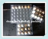 Fabricante plástico das bandejas do ovo de codorniz de China