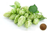 Extracto Europeo de la Flor del Salto, Extracto de los Saltos, Xanthohumol el 5%, Flavona el 3%;