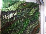 Piante di alta qualità e fiori artificiali della parete verde Gu-Wall05182927