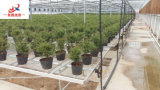 Seedbed en invernadero