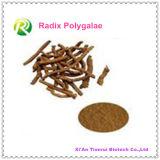 Radix naturale Polygalae dell'estratto della pianta di alta qualità