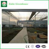 Surtidor hidropónico de cristal de la casa verde para el establecimiento vegetal de la flor del tomate