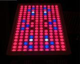 IR 실내 Hydroponic 시스템 900W LED는 플랜트 빛을 증가한다