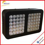 China-Goldlieferanten-beste Qualität 300W LED wachsen Licht