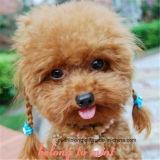 Perro perla de la manera / collar del gato, regalo del animal doméstico