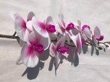 가정 장식 인공적인 난초가 실제적인 접촉 테이블 훈장 꽃 결혼식 신부 손에 의하여 꽃이 핀다