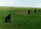 가격/농장지 담을 검술하는 안핑 공장에 의하여 직류 전기를 통하는 싼 농장