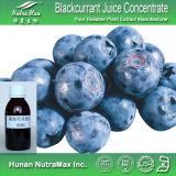 На заводе GMP продажи - Blackcurrant порошок, порошок, Blackcurrant Blackcurrant выжмите сок из фруктов порошок