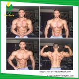 Китай питания USP32 стероидов гормон Raw порошок 11 - кроме того /Adrenosteron/11-Ketotestoste Paypal
