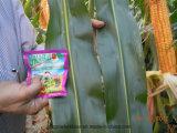 Fertilizante do solo de Unigrow para a plantação do milho