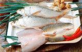 Gefrorene Frischwasserfische - frische Dace-Fische
