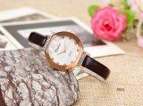 진짜 가죽끈 석영 시계를 가진 새로운 고품질 형식 OEM 숙녀 시계