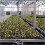 温室装置の温室のSeedbedかシードのベッド