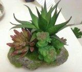 Plantes et fleurs artificielles des usines Zebra1 de Succulent