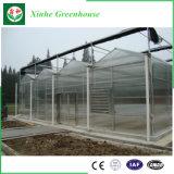Cubierta plástica del invernadero de la PC de la casa verde del jardín de la promoción con alta calidad