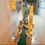 Verificação de peso de frango e solução de classificação automática