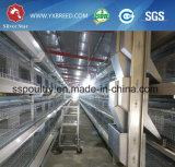 Cage de couche agricole utilisée sur la grande ferme