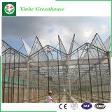 De Serre van het Glas van het Systeem van de Automatische Controle van de Fabrikant van China voor Landbouw