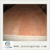 Madeiras comerciais choupo / Birch / Compensado de madeira de pinho de mobiliário
