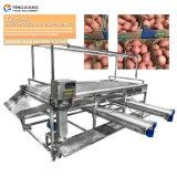 La patate douce de la machine de tri de classement de légumes