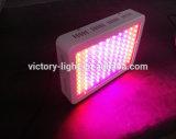 Innen Beleuchtung 300W LED wachsen wachsen Licht