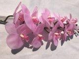 Реальная рука невесты венчания цветка украшения таблицы касания цветет орхидея домашнего декора искусственная