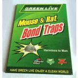 Piège à coller de rats de haute qualité avec le prix le plus bas
