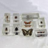 Alto pisapapeles transparente del acrílico de Embedment de la mariposa