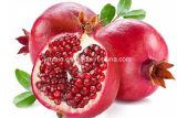 Haut-Weiß werden des natürlichen Granatapfel-Startwert- für Zufallsgeneratorauszuges, Ellagic Säure 40%~90%