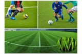 Herbe du football, herbe du football, herbe artificielle pour le football (SE55)