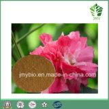 100%の自然な未加工原料のハイビスカスの花のエキスかポリフェノールの粉