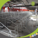 Système alimentant automatique de chaîne rapide et à haut rendement de la distribution