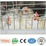 Jaula de la parrilla del equipo de la granja avícola para la granja de pollo