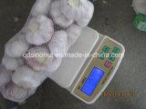 La nouvelle récolte normale de l'ail blanc 800g/carton de 8 kg